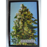 Cig.filtr knizka marihuana